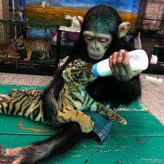 If only all animals could be like this with each other...