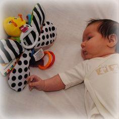 Toy: Freddie the firefly