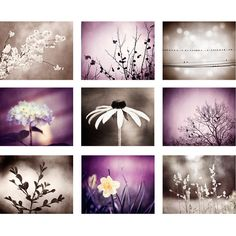 Purple, Brown Photography Set - plum dark violet beige 9 nine nature... ($108) ❤ liked on Polyvore featuring home, home decor, wall art, tree branch wall art, purple home decor, floral home decor, photography wall art and motivational picture