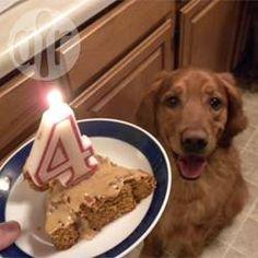 Rezeptbild: Geburtstagskuchen für Hunde