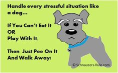 My #Schnauzer is my Life Coach. What lessons have your learned from your dog?