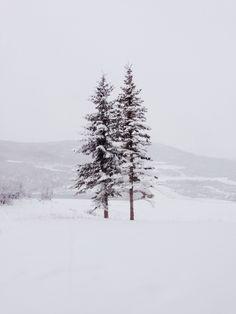 Winter snow | ulyk | VSCO