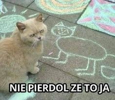 [Humor]Harry Potter Memes in Polish - Cytaty - Polish Memes, Weekend Humor, Best Memes Ever, Funny Mems, Hilario, Quality Memes, College Humor, Harry Potter Memes, Mood Pics