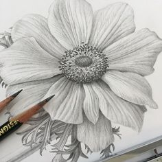 """It all starts with drawing. In the """"Drawing Flowers Realistically"""" tutorial I draw this flower and show the basics. Available through the link in bio. #botanical #graphite #botanicalart #pencildrawing #tutorial"""