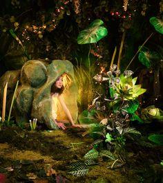 Зеленый мир-джунгли в фотопроекте Эдриен Брум.