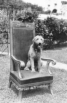 During Harding's term as thecountry's 29th president,Laddie Boyhad his own chair at the White House, which he sat in during cabinet meetings.
