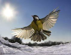 Frozen in flight - Jamie Unwin - Wildlife Photographer of the Year 2011 : 15-17 Years - Runner-up