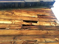 I'm watching you! Wood, Animals, Animales, Woodwind Instrument, Animaux, Timber Wood, Animal, Trees, Animais