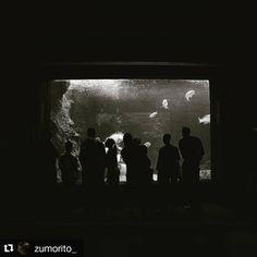 #Repost @zumorito_ with @repostapp ・・・ #cretaquarium  #Cretaquarium #myhersonissos #heraklion #gouves Heraklion, Greek Art, Beauty Care, Greece, Mystery, Spa, Concert, Instagram Posts, Unique