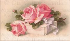 Pink Roses And White Gift Box With Bow By Catherine Klein