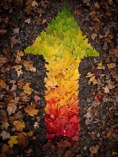 This way please. Obviously the prettiest color gradient leaf arrow ever. Cool inspiration for environmental art- so many possibilities...