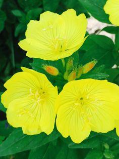 Очень красивые желтые цветы.