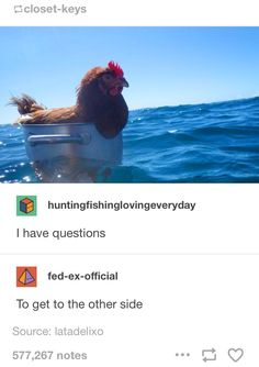 As soon as i saw this i thought of that stupid chicken from Moana>>HEi HEI Funny Cute, The Funny, Hilarious, Just For Laughs, Tumblr Funny, Make You Smile, Laugh Out Loud, Dumb And Dumber, Memes