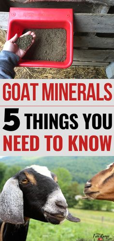 Raising Goats: Goat minerals are important to your goat's health. Learn what you need to know about goat minerals. Starting A Farm, Meat Online, Goat Care, Goat Meat, Raising Goats, Home Canning, Goat Farming, Backyard Farming, Down On The Farm