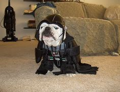 Look, I am not your father, I just have silly owners.
