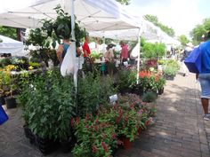 Plants Spring Fever, Winter Garden, Sidewalk, Bloom, Plants, Side Walkway, Walkway, Plant, Walkways