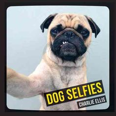 A hilarious collection of dogs taking selfies Everyone is snapping selfies, and dogs are no exception! Animal selfies are increasingly popular on the internet and beyond. From the sublime to the ridic