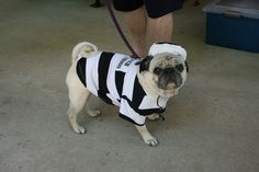 Escapee from Milan prison, ends up at the Pugnic