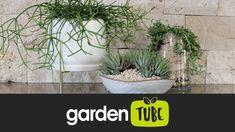 Houseplants, Garden, Garten, Indoor House Plants, Lawn And Garden, Gardens, Gardening, Outdoor, Potted Plants