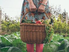 Enjoying gardening doesn't end with a beautiful yard; there are many health benefits to digging and mowing too. Gardening Zones, Texas Gardening, Hydroponic Gardening, Hydroponics, Organic Gardening, Container Gardening, Gardening Tips, Benefits Of Gardening, Starting A Vegetable Garden