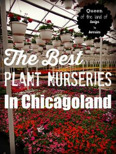 Best Plant Nurseries in Chicagoland - www.queenofthelandoftwigsnberries.com