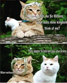 These Cats Are Hilarious funny cat lol humor funny pictures funny cats funny photos funny images funny animal pictures hilarious pictures Funny Animal Memes, Cute Funny Animals, Funny Animal Pictures, Funny Cute, Cute Cats, Funny Memes, Funny Pics, Pretty Cats, Animal Captions