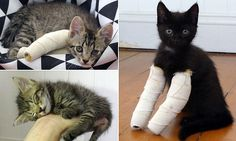 Kittens born with leg deformities to mum with feline HIV need care
