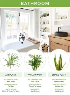 Looking for fresh home decor? Our guide to the best houseplants for every room will help you narrow down your selection and create a healthier home! Garden Spaces, Free Plants, All About Plants, Modern Room, House, House Plants Indoor, Table Top Decor, Home Decor, Plant Decor