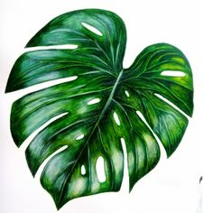 How to paint Monstera Leaf How to paint Monstera leaf in quick video.All artists create their works Watercolor Leaves, Watercolor Artists, Watercolor Paintings, Plants Watercolor, Watercolor Rose, Watercolor Design, Leaf Drawing, Plant Drawing, Plant Painting