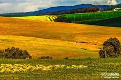 South Africa, Golf Courses, Country, Rural Area, Country Music