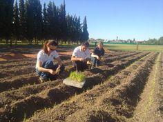 Unilever: La agricultura sustentable y el desafío de abastecer al mundo