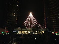 Tree at the Marriott