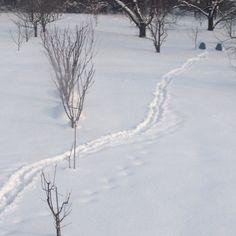 Strada nella neve