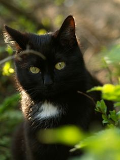 Cat Perspective - Green Eyed Beauty