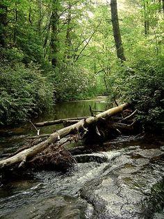 Sarah's Creek, Clayton, Georgia (by WaterSprite)