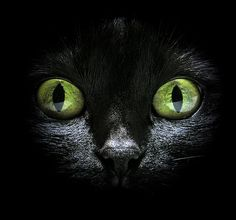 """""""Who can believe there is no soul behind those luminous eyes?"""" --Theophile Gautier"""