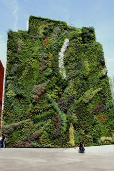 Vertical garden for the garage wall