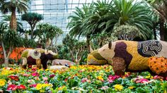 discover the vibrant floral colors of south africa gardens by the bay singapore from - Garden By The Bay East Car Park