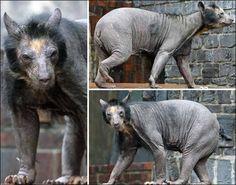 Ursos Sem Pelos. http://www.ativando.com.br/imagens/ursos-sem-pelos/