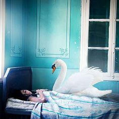 #swan my version of #leda&theswan #photooftheday #photography