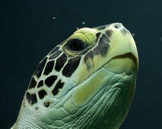 i like turtles :)