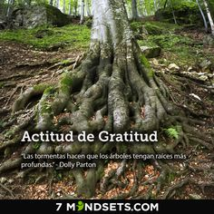 Actitud de Gratitud