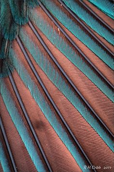 Close-up of a Kingfisher's wing feathers: the colours change with the light. It was photographed outside in morning light Patterns In Nature, Textures Patterns, Color Patterns, Beautiful Patterns, Organic Forms, Design Textile, Fotografia Macro, Morning Light, Macro Photography