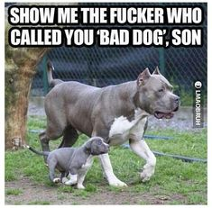 You know that's funny #pitbull