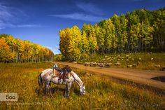 White Horse in Golden Country by emarcinek. Please Like http://fb.me/go4photos and Follow @go4fotos Thank You. :-)