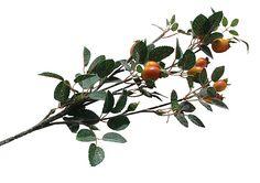 Rose Hip Branch - 70cm