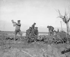 WWI, Jan 1917, Balkan Front; Royal Engineers constructing a brush work causeway through a flooded area. ©IWM