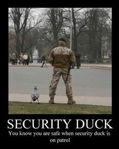 It Never Hurts to Have Quackup-I'm borrowing this awesome line from whoever said it!