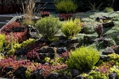 The Top California Drought Tolerant Plants | ValleyCrest Takes On