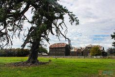 Discovering Brickendon Estate: a World Heritage convict site in Tasmania, Australia